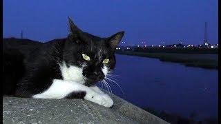 【地域猫】キュー爺とナナ姫がご飯を食べてる姿を見て安堵する。【魚くれくれ野良猫製作委員会】