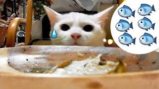 イケナイと分かってる神猫さん ヒメちゃんと猫ちゃんはお友達
