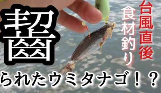 【釣った魚で食材0円!豪華料理を作るぞ】高級魚天ぷらと絶品アオサ料理 山菜野草採取,生あおさで作り置きおかず絶品卵焼き!
