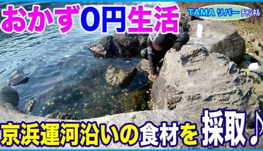 「おかず0円生活」京浜運河沿いの食材探し♪(^o^)ノ