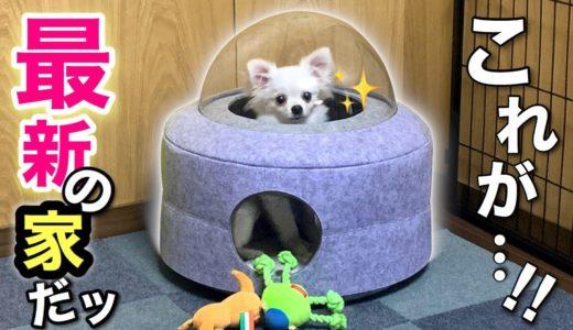 【屋根がスケスケ❤️】子犬のハウスが未来型で斬新すぎる!ふくちゃんの家作り❤︎チワワ×ポメラニアンの犬芸も披露 可愛いくて癒される❤︎