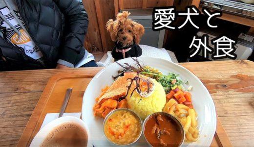 【トイプードル】子犬ルルと一緒にスリランカ料理を食べました♪犬同伴OK
