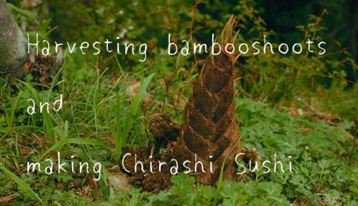 Harvesting bamboo shoots and making Chirashi Sushi | 筍の収穫とちらし寿司作り