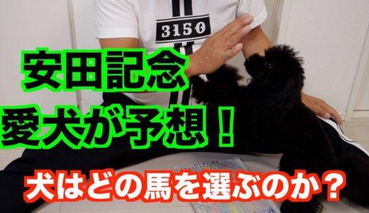 【安田記念】愛犬のプードルが安田記念を予想!