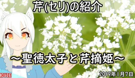【日刊動画】 芹(セリ)の紹介~聖徳太子と芹摘姫~【2020年1月7日】