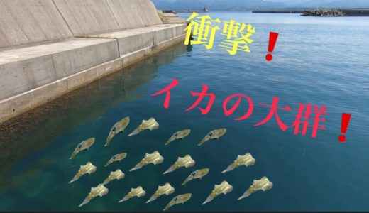 イカの群の近くで餌(サビキ)釣りをしてみた結果・・・