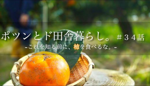 """【ポツンと農業】田舎の28歳アラサー農業Youtuberが語る。 不健康な社会人のための""""柿"""" 奈良産"""