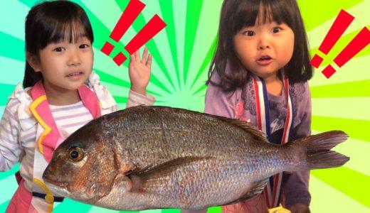 【たいが釣れた?】まりちゃんたちと釣りをしたよ!晩ごはんにしてみよう♫◆まりちゃん いずちゃん みなくん パパ 食育 教育 釣り 魚 鯛 挑戦