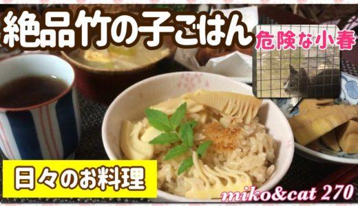 日々の料理 絶品竹の子ごはん 危険な猫 網戸突き破る猫